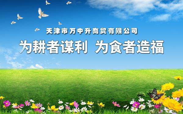 农产品电商第一人吕凤芝,探索传统行业销售新模式